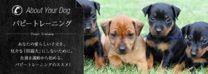 パピートレーニング あなたの愛らしい子犬を、厄介な「問題犬」にしないために。生後8週間から始める、パピートレーニングのススメ!