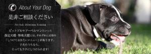 是非ご相談ください「ピットブルやドーベルマンといった指定犬種・特殊犬種には、それぞれに必須の「しつけておきたいメニュー」があります。子犬のうちなら、とってもラクにしつけられます!